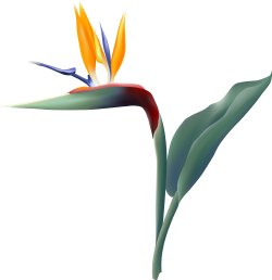Bird of Paradise Flower clip art
