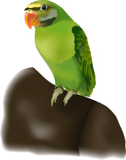 Pirate Parrot clip art